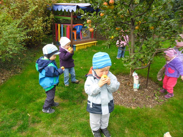 Die Kleinsten bei der Apfelernte