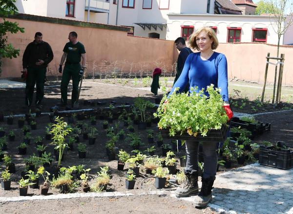Landschaftsarchitektin Petra Pelz im Mai beim der Bepflanzung des Weißen Gartens mit einer Kiste »Storchschnabel«