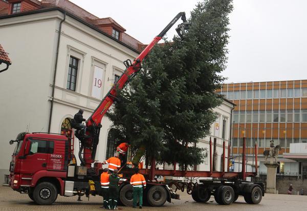Gestern wurde der Weihnachtsbaum für den Sternenmarkt aufgestellt. Er wurde in diesem Jahr von einer Familie aus Glüsig spendiert. Es ist  eine zirka 13 Meter hohe Colorado-Tanne.