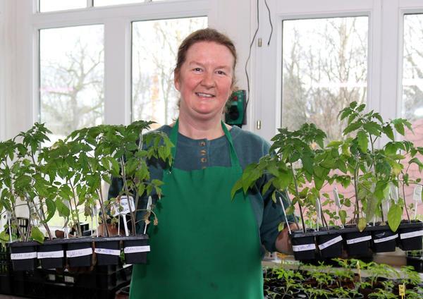 Heike Reps zeigt stolz die Tomaten-Jungpflanzen, die sie beim Saisonstart verkaufen wird.